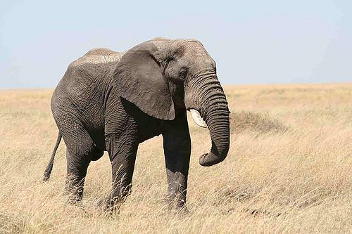 The Elephant On TV