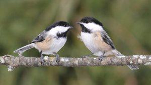 Birding Walks @ Various Parks