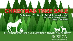 Tree sale at the Surrey BCSPCA Education and Adoption Centre @ BCSPCA Surrey Education and Adoption and Centre | Surrey | British Columbia | Canada