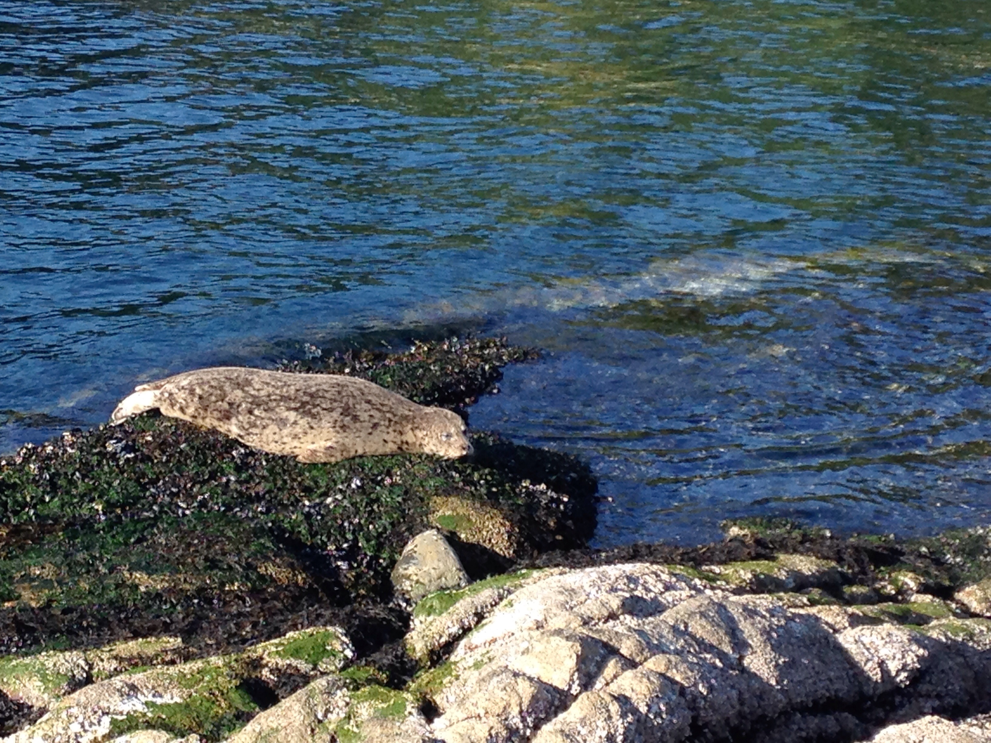 Great place to spot Marine Wildlife in the Lower Mainland