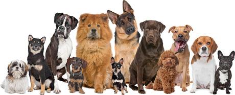 Dog Owner Arguments