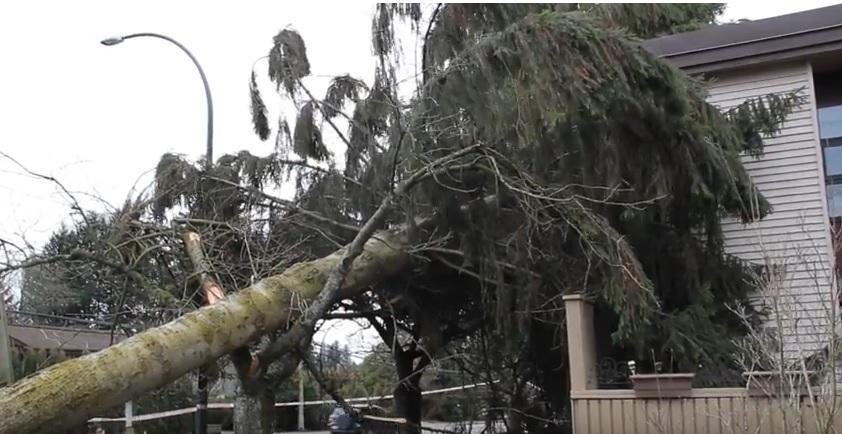 VIDEO: Tree Falls on Surrey Home in Weekend Windstorm